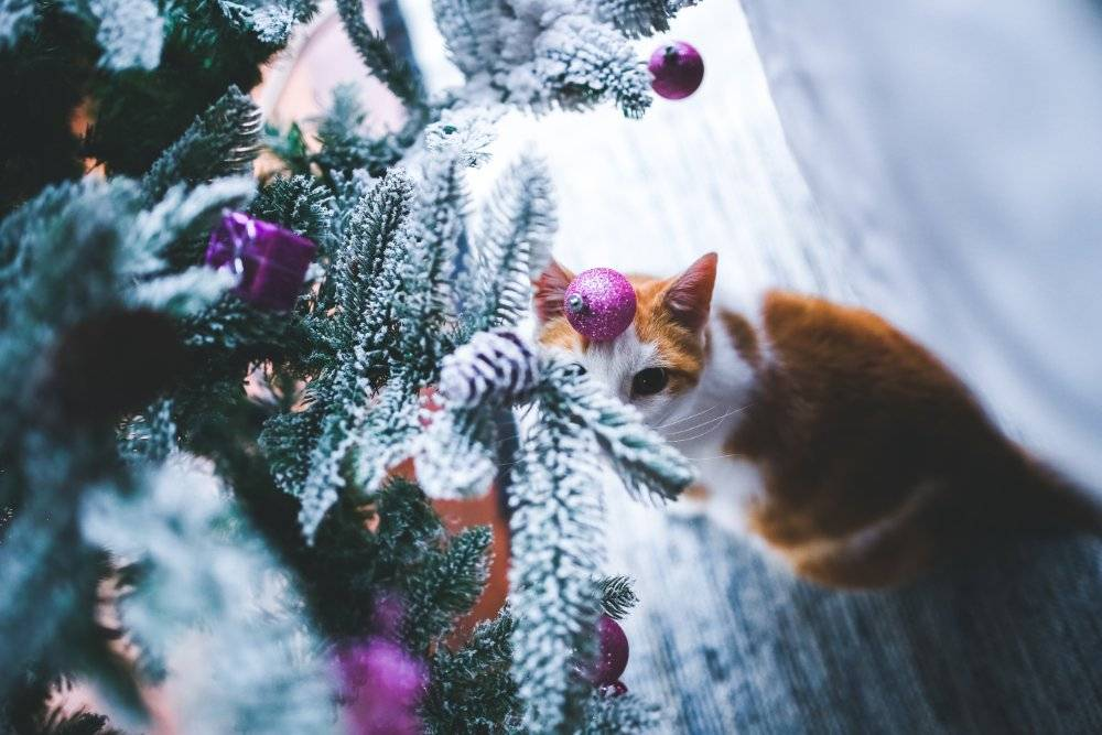Top tips for keeping pets safe at Christmas time